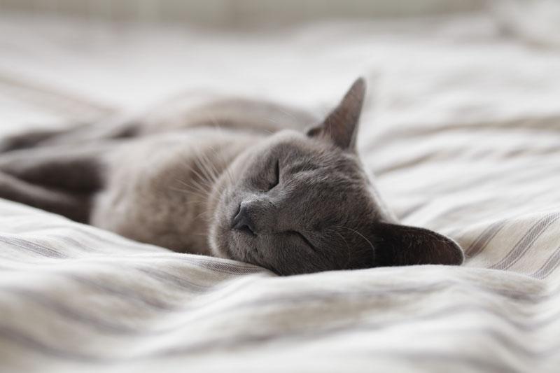 katzenurin fleck und geruch vom sofa entfernen teil 1 tiptop polsterreinigung. Black Bedroom Furniture Sets. Home Design Ideas