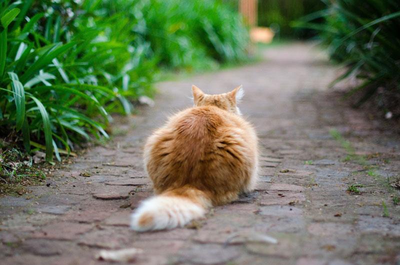 Katzenurinfleck Und Geruch Vom Sofa Entfernen Teil 2 Tiptop